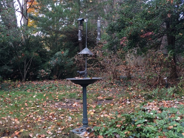 Having water near the feeders is important to attracting a wide range of species. We've identified 35 different ones over four years.
